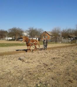 Работа лошади - 10 гривен за сотку