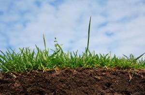 В Украине могут полностью запретить продажу сельхозземель