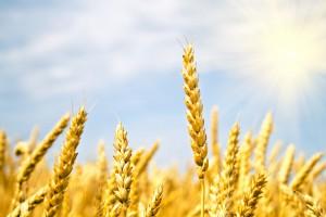 Экспорт зерна в Китай вырос в 8 раз