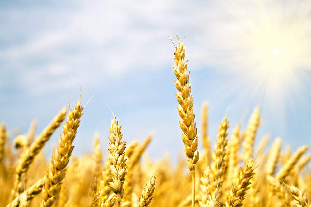 Крымское зерно вывозят в страны Ближнего Востока