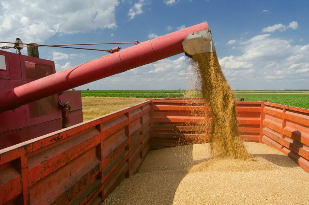 Зерно из аннексированного Крыма экспортируют в Саудовскую Аравию