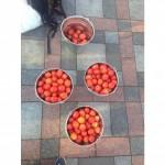 Кабмин одобрил инвестиции в переработку томатов