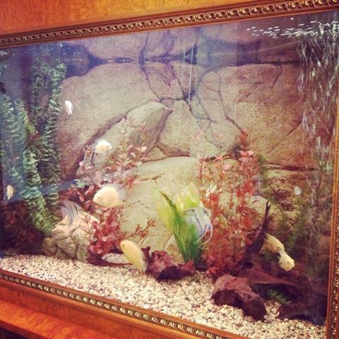 Золотой рыбки у Пивоварского , к сожалению, нет
