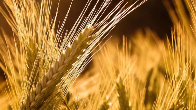 Украина бьет рекорды по экспорту зерна