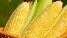 Кения заказала крупную партию украинской кукурузы