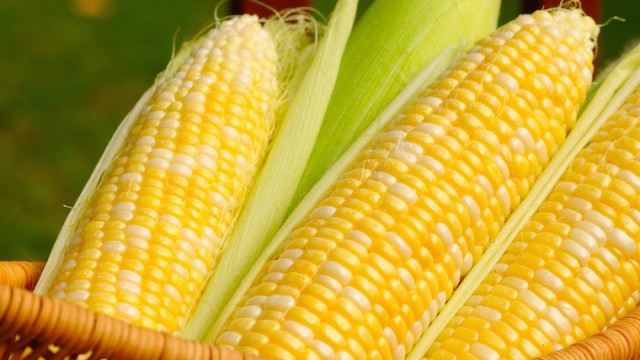 За рубеж ушло 20 млн тонн украинской кукурузы