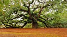 Президент утвердил мораторий на экспорт леса