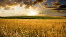 Солнце и воздух - лучшие друзья урожая