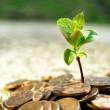 Аграрии освоили капинвестиций на 58 млрд грн