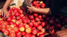 «Сади Прикарпаття» называет себя единственной компанией в Украине, производящей соки из собственного сырья