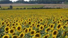 Рентабельность производства агропродукции превысила 37%