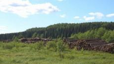 Экспорт леса выводят из-под моратория