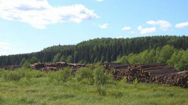 Все лесхозы объединят в госкомпанию