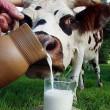 Сельхозпредприятия нарастили производство молока на 4,2%