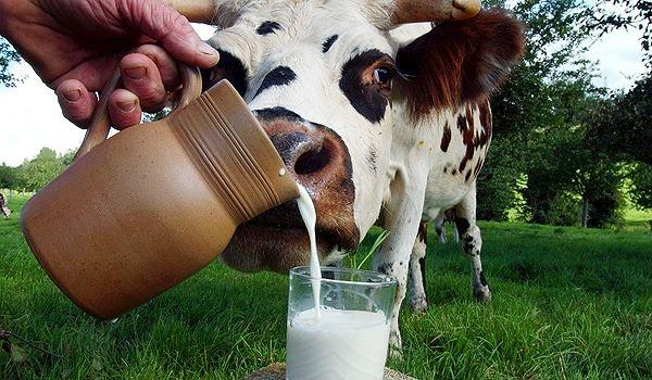 Саудовская Аравия приняла ветсертификат на украинское молоко