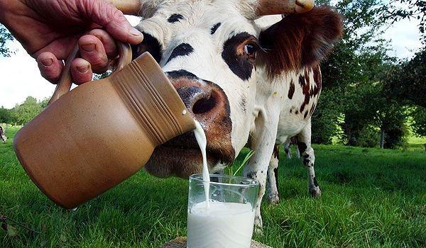 Начались поставки сухого молока в Китай