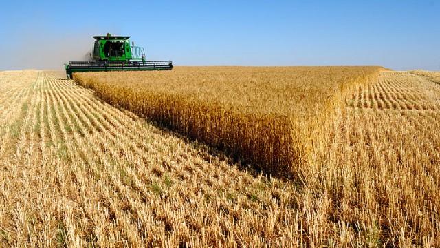 Аграрии обеспечили 37% валютных поступлений в Украину