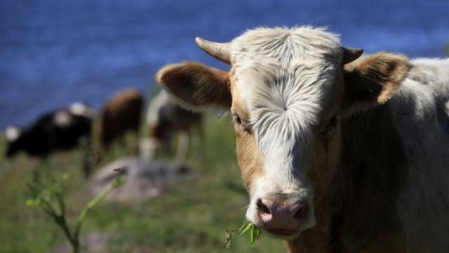 Экспорт агропродукции в РФ упал на 68%