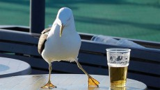 Госстат не подтвердил рост импорта пива из России