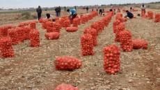 В Украине производство сельхозпродукции упало на 5%