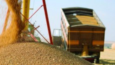 Аграрии намолотили 60 млн тонн зерна