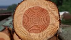 ВР заблокировала инвестиции в деревообработку