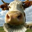 Счета аграриев для уплаты НДС будут разблокированы, - УАК