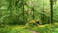 Гослесагенство высадило 25,5 тыс. га. леса