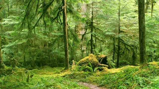 Во Львовской области незаконно вырубили лес на 2 млн гривен