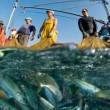 В Азовском море поделили лимиты на вылов рыбы
