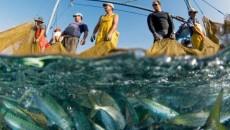 Вылов рыбы увеличился на 18%