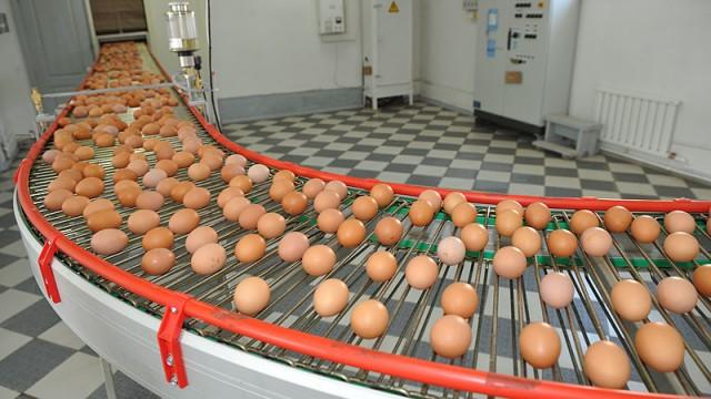 Спад производства яиц составил 15%