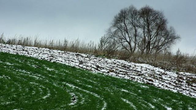 В Минагрополитики успокаивают, что непогода не сильно повлияет на урожай озимых
