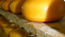 Экспорт сыра упал на 37%