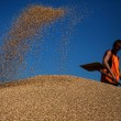 Украина экспортировала 12,4 млн тонн зерновых