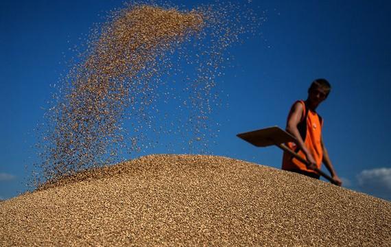ГПЗКУ срывает миллиардный контракт на поставку зерна в Китай - СМИ