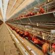 Евросоюз возобновил ввоз мяса птицы из Украины