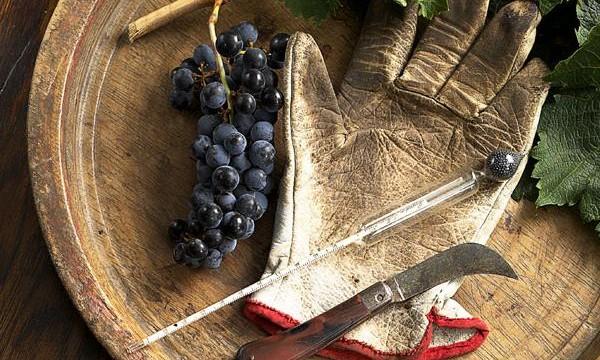 Виноделы в Одессе призвали решить проблемы отрасли