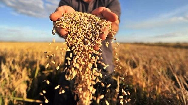 Харьковщина в целом повысила аграрные показатели