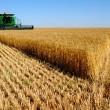 В Украине сельхозпроизводство выросло на 6,1%