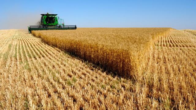Наибольшее количество аграрной продукции изУкраины импортируют Нидерланды