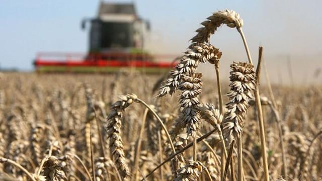 Украина стала крупнейшим импортером пшеницы в ЕС