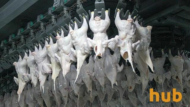 Молдова ввела запрет на ввоз мяса птицы из Украины