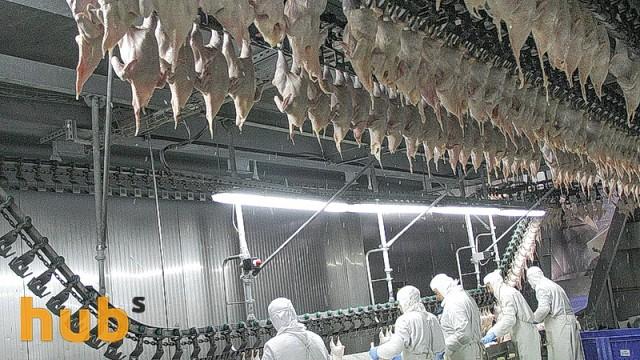 Украина ворвалась в топ-10 мировых экспортеров замороженной курятины