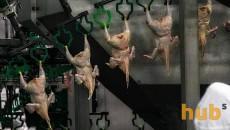 Несколько стран сняли с Украины ограничения на экспорт мяса птицы