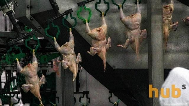 Экспортеры мяса птицы и субпродуктов заработали $70 млн