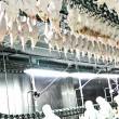 Украина увеличила экспорт мяса птицы