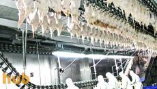 Украина закрыла границу для импорта австрийской птицы