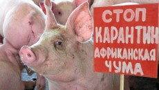 АЧС не отступает от Украины