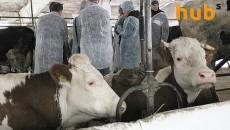 «Галекс-Агро» запустит предприятие по переработке органического мяса